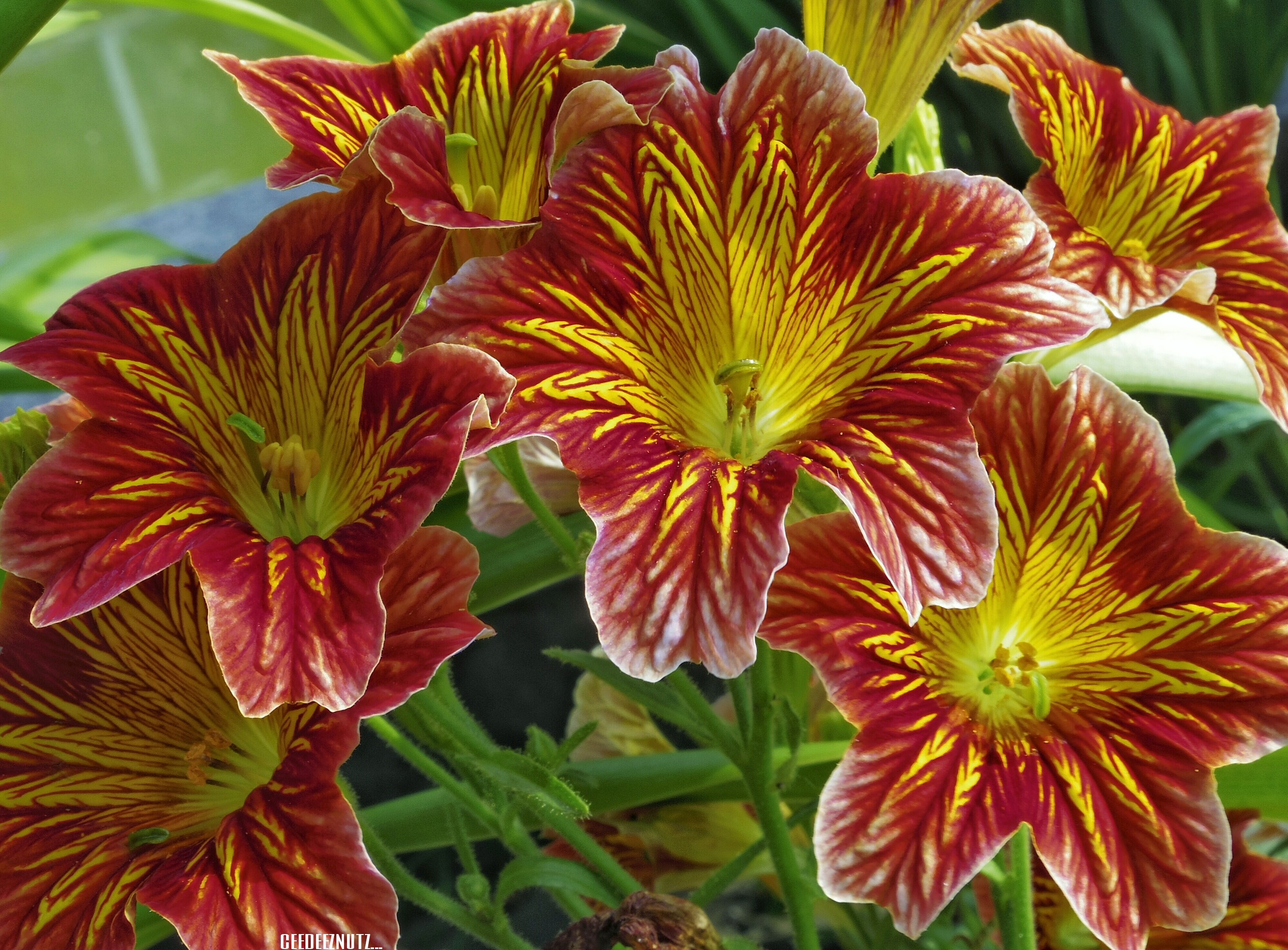 Same magnificent flower different colors damn flow for What makes flowers different colors