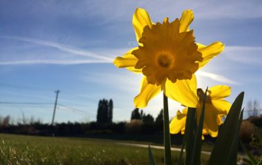 waphorizon spring nature flower yellow