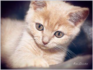 petsandanimals cute cat portrait photography