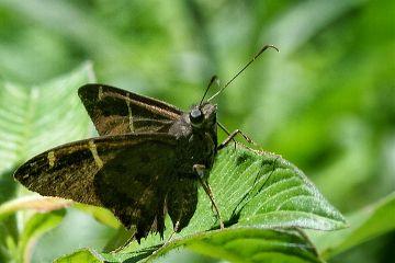 photography nature petsandanimals macro butterflies