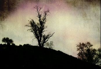 tree artistic freetoedit nature landscape