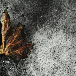 photography winter colorsplash nmlf leaf