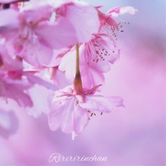 flower nature spring cute