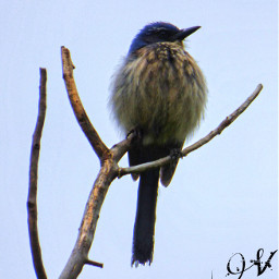 cute nature petsandanimals photography bird