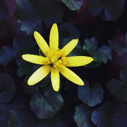 yellow_flower park