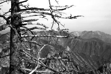 bark tree blackandwhite photography