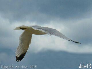 seagull bird flight flying