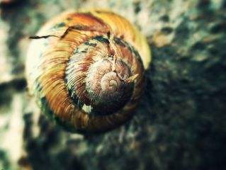 taken snail shell broken nature