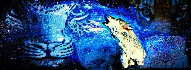 wolf felines anarquia legacy