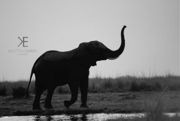 elephants animals photography travel