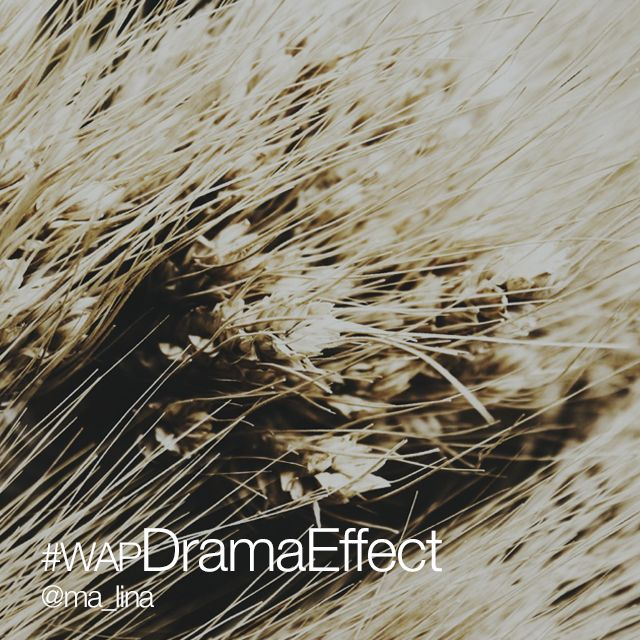 drama effect photo contest