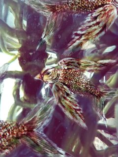 bird fish mystery