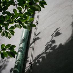 lightandshadow lichtundschatten urbannature natureonmydoorstep greenleaves