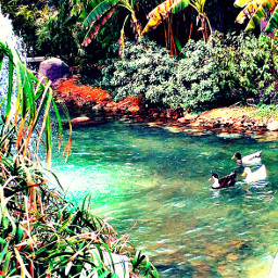 ducks river seefoameffect hdr1 blur