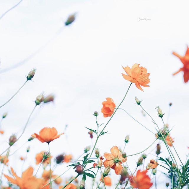 #flower #nature #photography #summer
