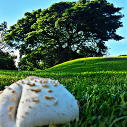 mushroom morning maui tree nature
