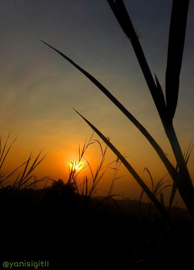 #photography #nature #sunrise #sky #summer