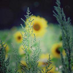 nature plants naturephotography bokeh