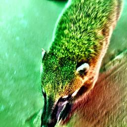 nature animal coati lovely photography