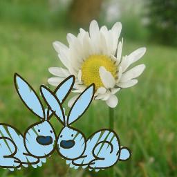 love kr rabbit rabbits
