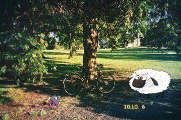 park puppies nature bicicle