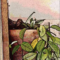 dove nesting plant watercolour dodger