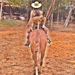 horse cowgirl blueheeler