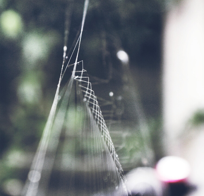 Cool looking spiderweb with some awesome #lines