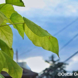 leafs fall nevada reno green