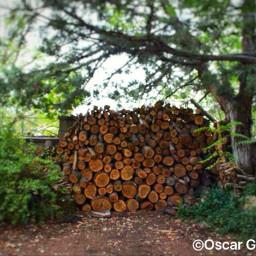 wood fall reno nevada september