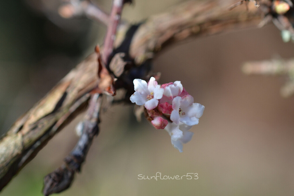 """Find ,, people who feel with us and feel is probably the most beautiful happiness on earth """" #photography #flower #nature #macro #landscape #emotions #quotesandsayings #s #spring"""