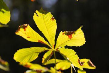 autumn noedits macro