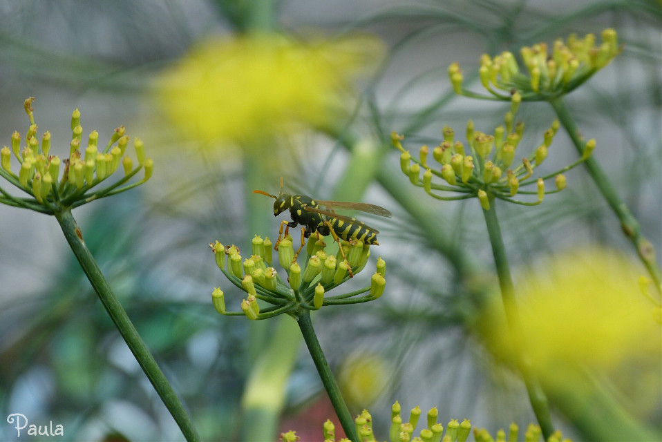 #outoffocus #depthoffield #dailyinspiration #colorful #photography #nature #garden #flower #wasp #yellow #black  #like