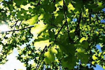 spring sunshine tree nature hdr2