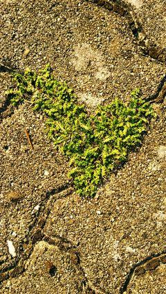 love greenheart nature keepyoureyesopen