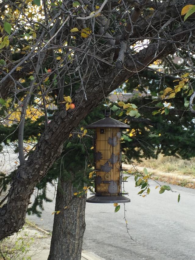 #fall #montana #myfrontyard